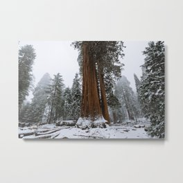 Winter in the Giant Forest Metal Print