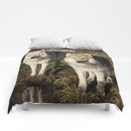 Pick of the Pride Comforters
