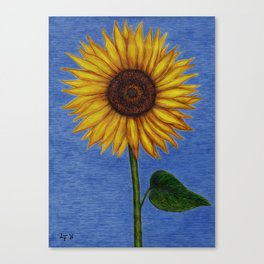 Sunflower by Lars Furtwaengler | Ink Pen | 2011 Canvas Print