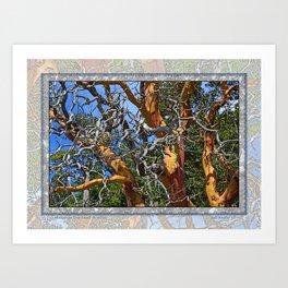 MADRONA TREE DEAD OR ALIVE Art Print