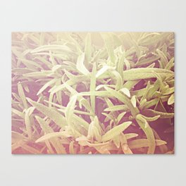 furry grass Canvas Print