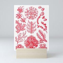 Ernst Haeckel Florideae Red Algae Mini Art Print