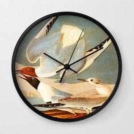 Bonapartian Gull Wall Clock