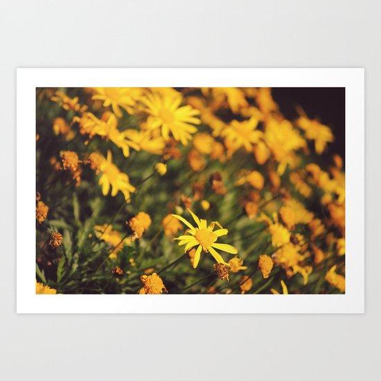 Sigue el camino de margaritas amarillas Art Print