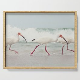 Three Little Ibis All in a Row Serving Tray