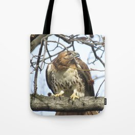 Curious hawk 10 Tote Bag