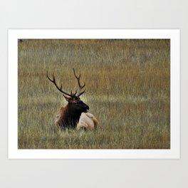 Jasper Elk Art Print
