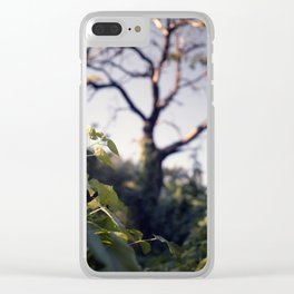 Old Tree, Color Film Photo Clear iPhone Case
