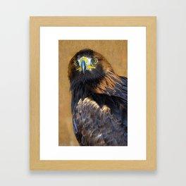 Scottish Golden Eagle Framed Art Print