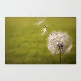 Wishing on a Dandelion Canvas Print