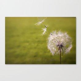 Wishing on a Dandelion Canvas Print