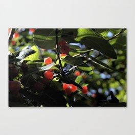 Jane's Garden - Sunkissed Red Berries Canvas Print