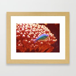 The Wonder Fish Framed Art Print