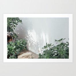 Succulents & Shadows Art Print