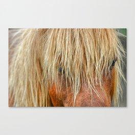 Shaggy Pony Canvas Print