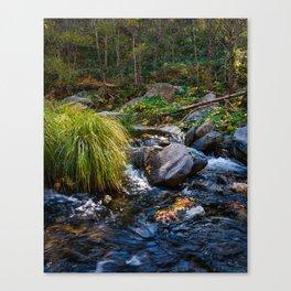 Sedona Oak Creek Canvas Print