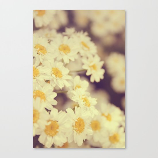 Daisy Heaven Canvas Print