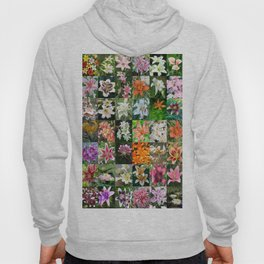 Lily Montage Hoody