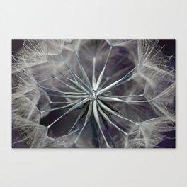 Meadow Salsify 5143 Canvas Print
