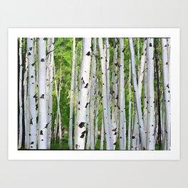 Aspen Trunks near Aspen, Colorado Art Print