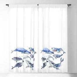 Whales, Whale design, whale wall art, sea, marine aquatic animal art, school learning wall Blackout Curtain