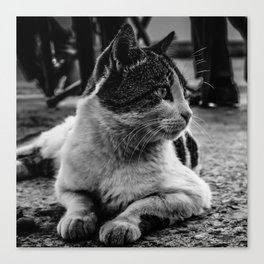 Istanbul Cats Canvas Print