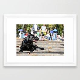 Dogs world Framed Art Print
