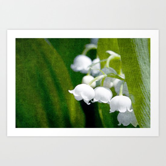 Lily of Peace Art Print