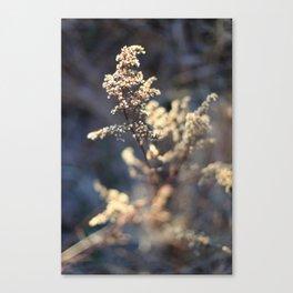The Trail 1 Canvas Print