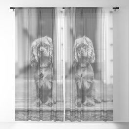 Cute puppy by Gez Xavier Mansfield Sheer Curtain