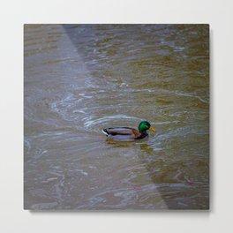 Duck in creek Metal Print