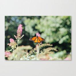 buttery bokeh butterfly Canvas Print