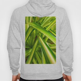 Spider Plant Leaves Hoody