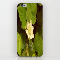 Blackberry Flower. iPhone & iPod Skin