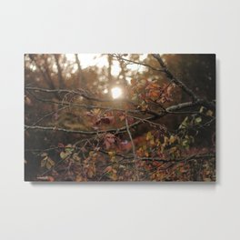 Light and Solace Metal Print