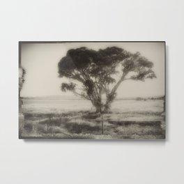 Cottonwood Metal Print