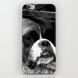 Boxer Dog On Windowsill iPhone Skin