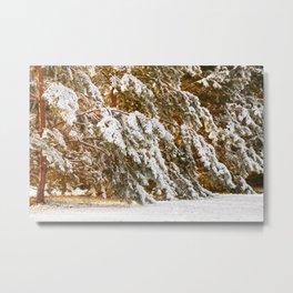 Winter Wonderland 19 Metal Print