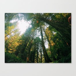 If Trees Could Talk Canvas Print