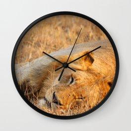 On Safari - Sleeping Lion Wall Clock