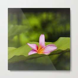 Macro photograph of a Frangipani flower fallen off on to a green leaf. Metal Print