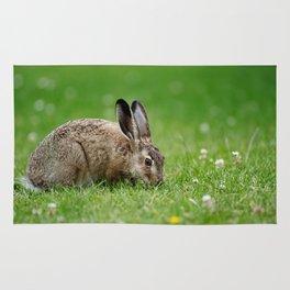 Lepus europaeus young hare Rug