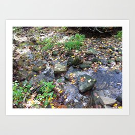 Hoosier National Forest - Creek Bed Art Print