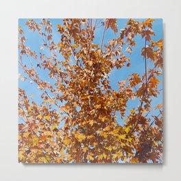 Blue Sky, Orange Leaves Metal Print