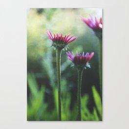Floral: Reaching Canvas Print