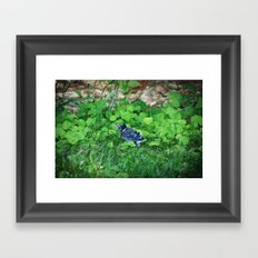 Baby Bluejay Bird Color Photo Framed Art Print