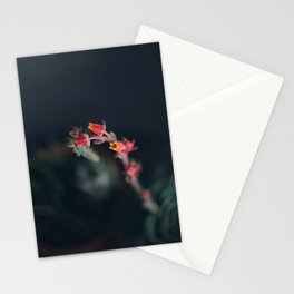 Succulent (3) Stationery Cards