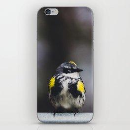 Yellow-Rumped Warbler iPhone Skin