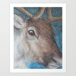 Reindeer (Rangifer tarandus) Art Print