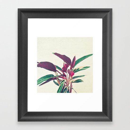 Prayer Plant Framed Art Print